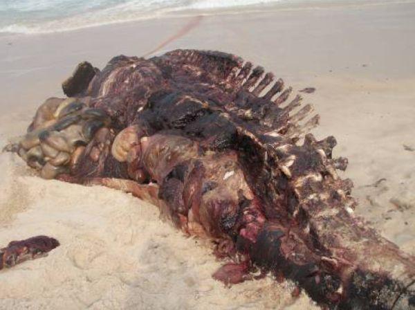 Whale skeleton on beach - photo#6