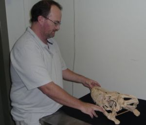 Snr. Curator Geosciences, Scott Hocknull, describes some fo the features of a Megalania skull.