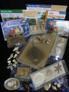 Content of the Marine Life Loan Kit available from the Queensland Museum